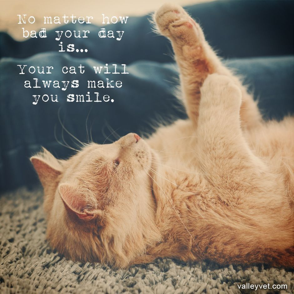 Pin by Maria João Cacheira on Cats   Cats, Cat quotes, Cute animals