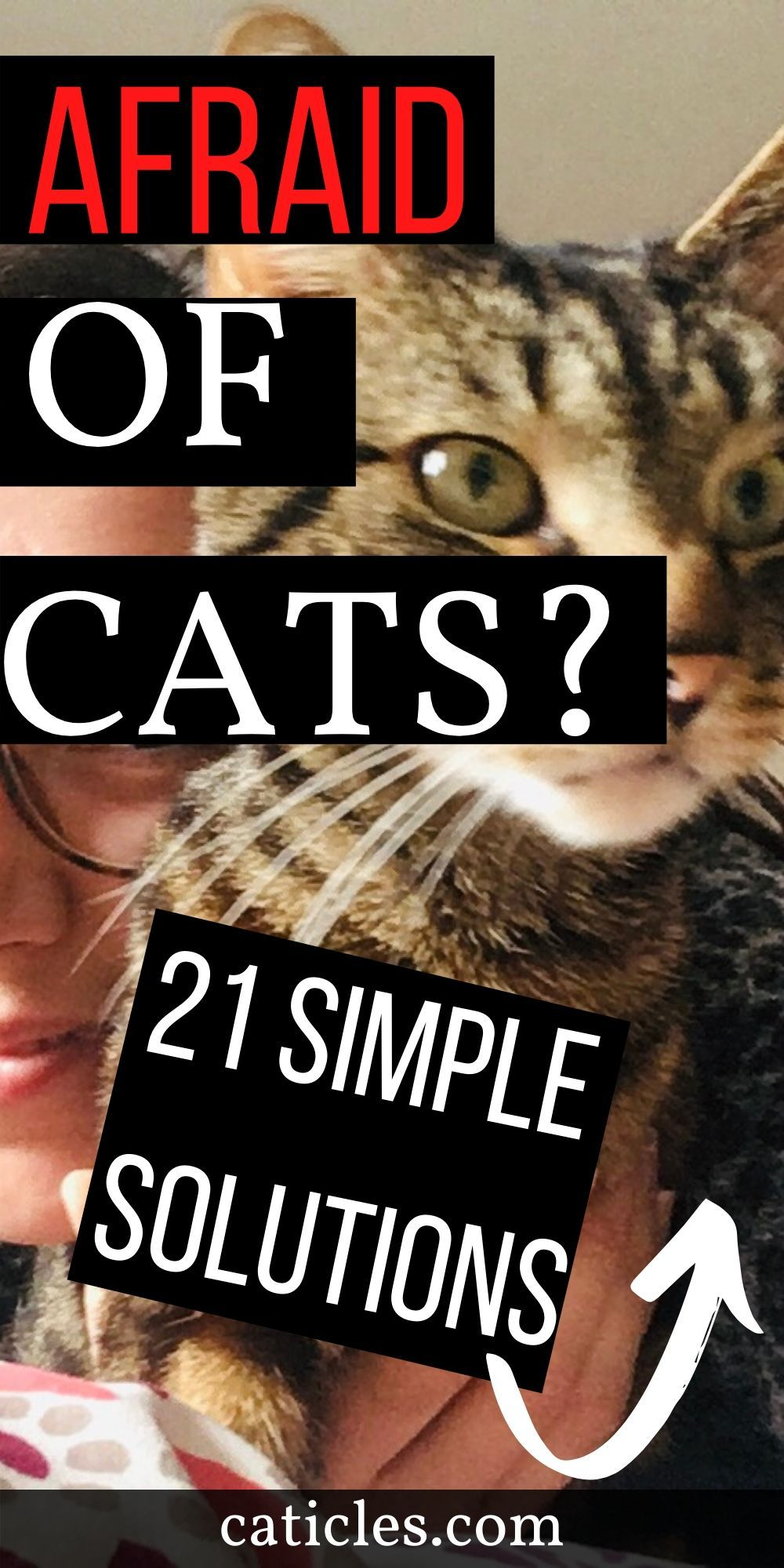 Afraid Of Cats 21 Simple Ways To Fix Your Fear Of Cats Caticles In 2020 Cat Problems Cat Care Kitten Care