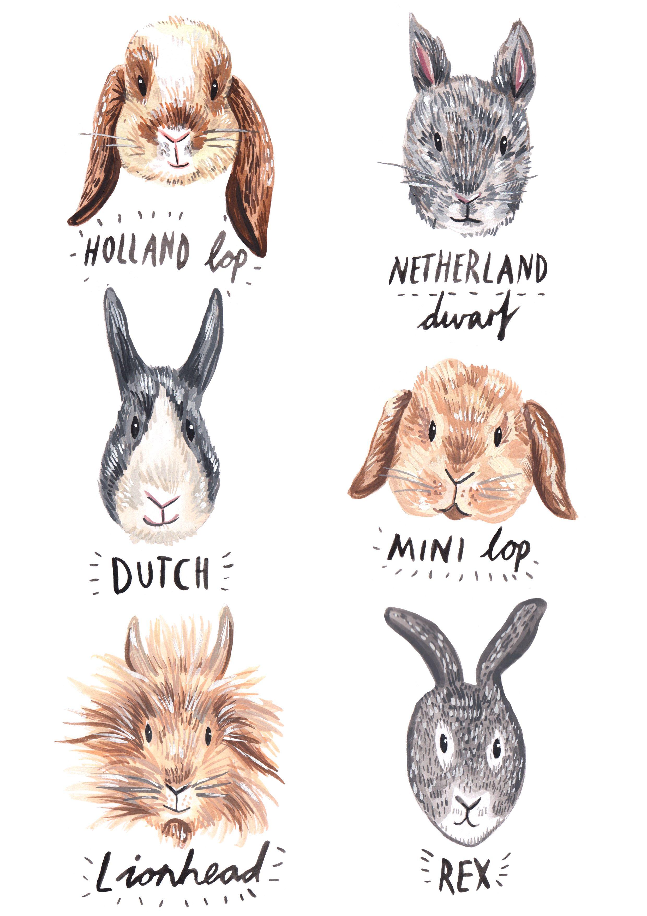 rabbit art print bunny print bunny art bunny art print rabbit print bunny watercolor bunny art nursery netherland dwarf rabbit art