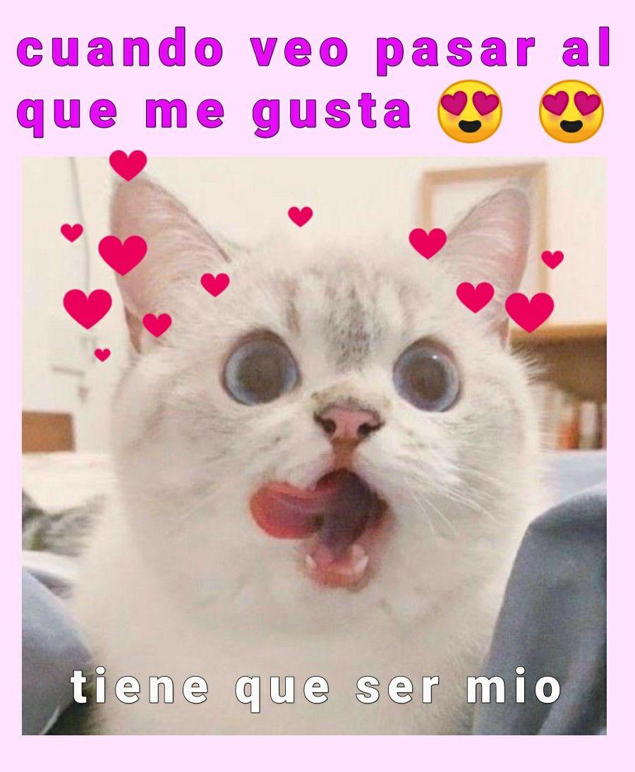 Mas Que Las Anvorguesas Memes Risas Memesespanol Instagram Fotos Chistes Top Comic Love Hoy Friends Amor Funny Spanish Memes Cat Memes Funny Memes