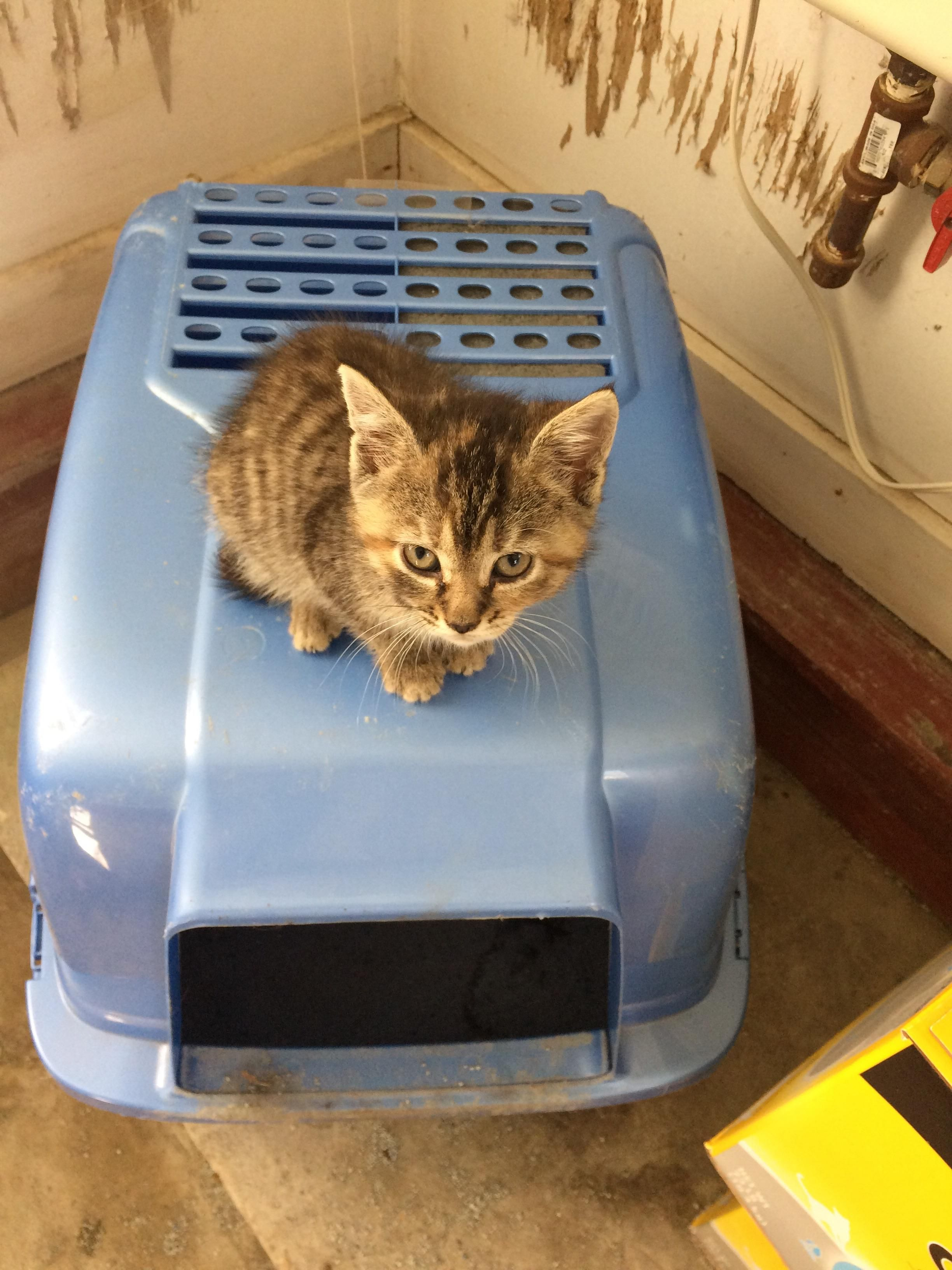 She Loves Sleeping On The Litter Box Https Ift Tt 2xa7lhl Litter Box Litter Cat Day