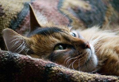 snuggly cat