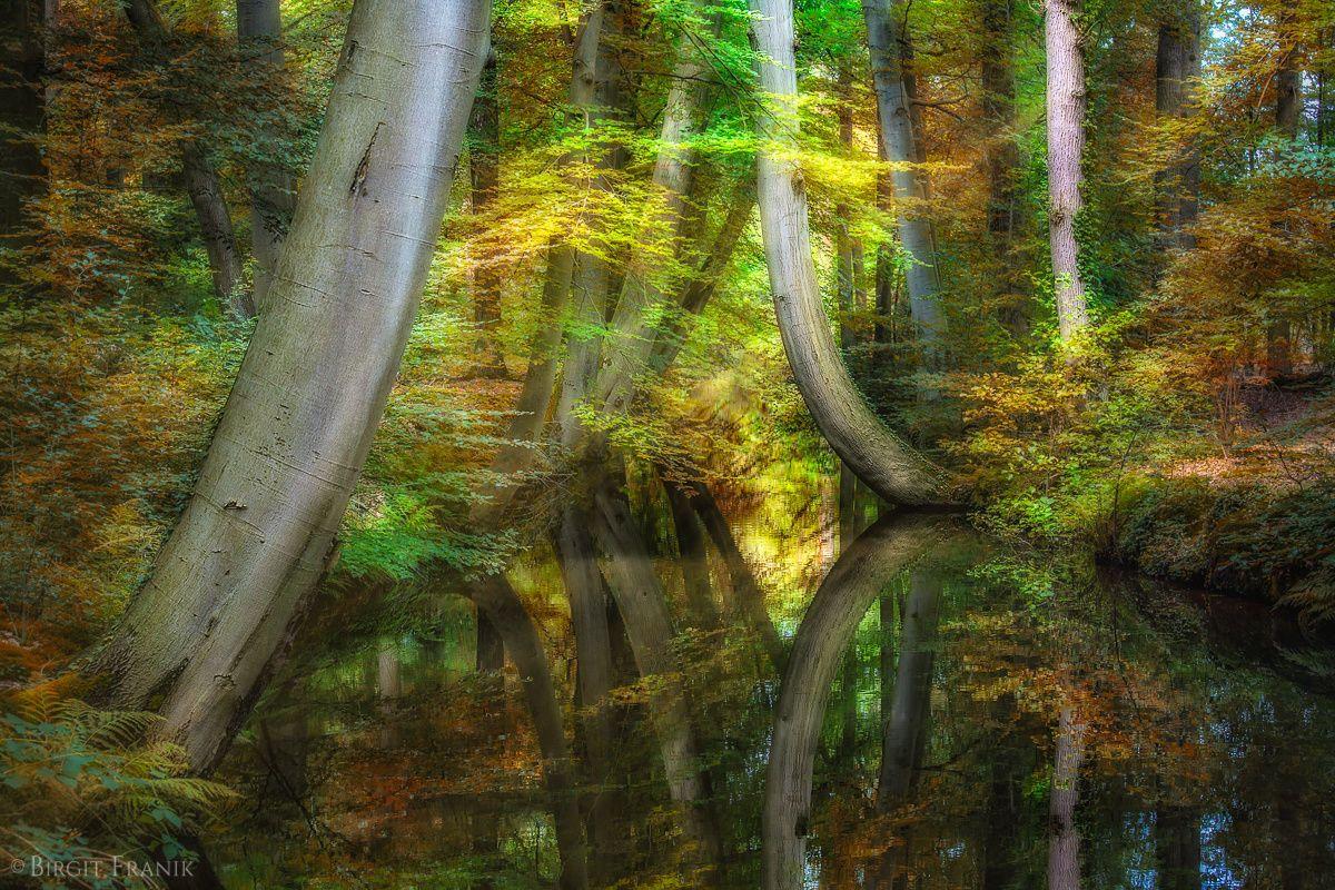 ***Autumn (Netherlands) by Birgit Franik on 500px
