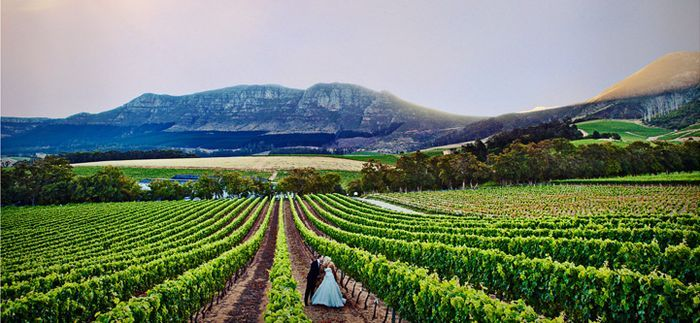 Wedding in The Cape Wine Lands | Somerset west, Southern ...