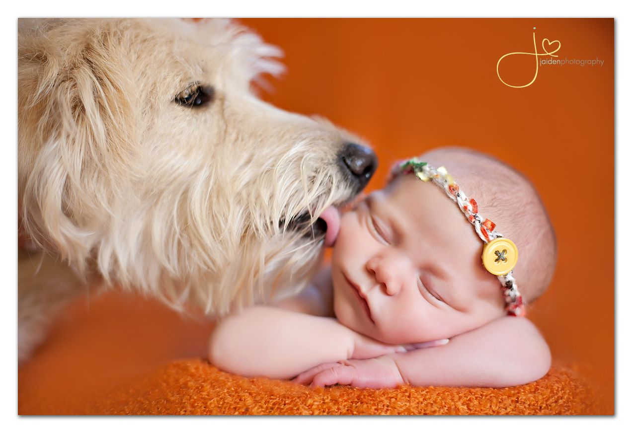 Dogs + Babies = Cute