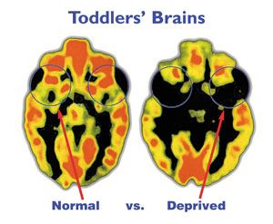 Experiences make a difference in early brain development - Free Printable for you to share!