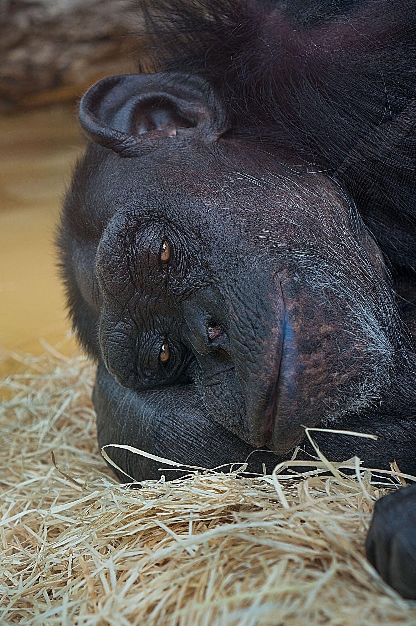 Fancy Zoo Karlsruhe