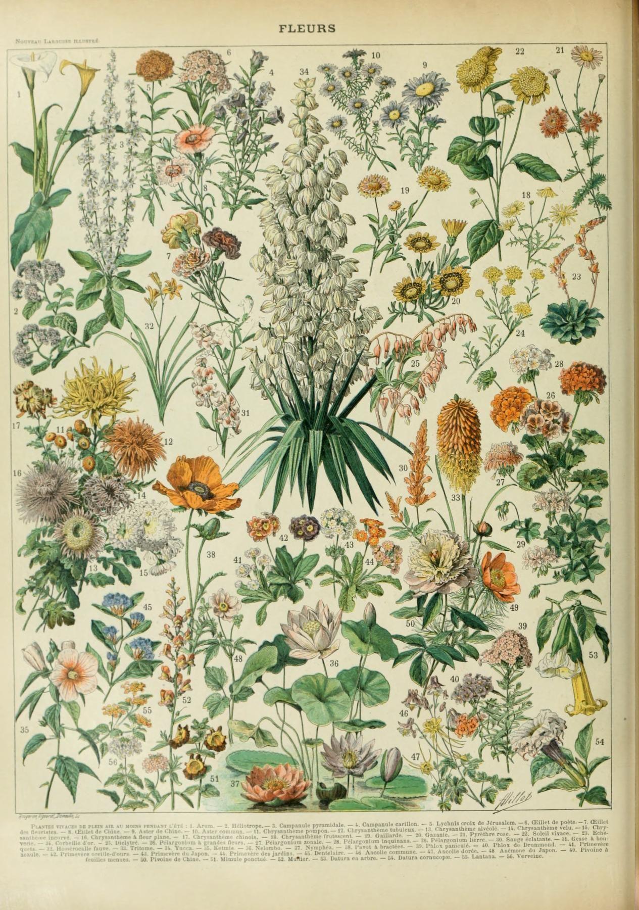 Nouveau larousse illustr fleurs my flowers for Botanic fleurs artificielles
