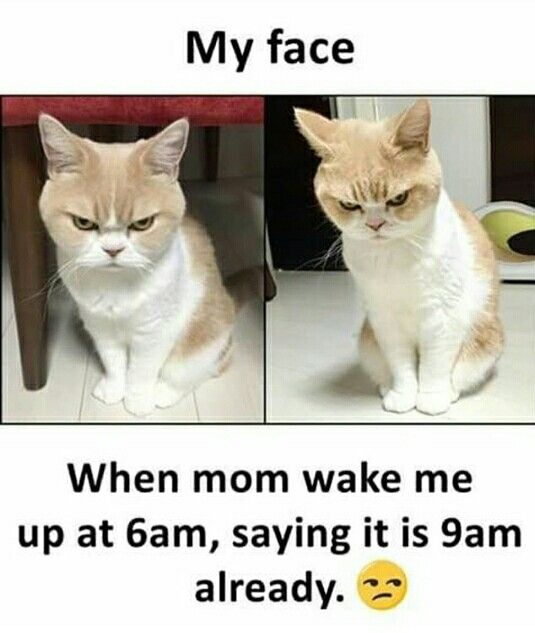Really But My Mom Not Get Up Me At 6 Am 8 Or 8 30 But Ya She Always Say Time 9 Or 9 30 Funny School Jokes Cat Quotes Funny Fun Quotes Funny