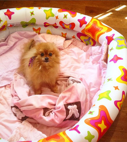 Cant Afford A Crate For Pomeranian Puppy Training Crate Training