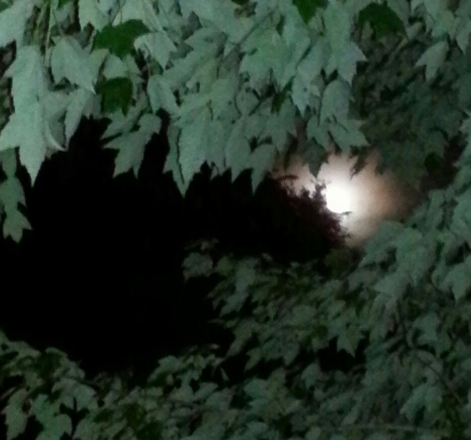 The moon through our front tree.  Such a beautifully moon. Love God's creations.