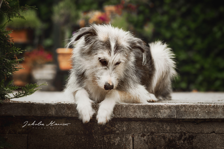 Tierfotografie Hund Hundeportrait Fotografie Sommer