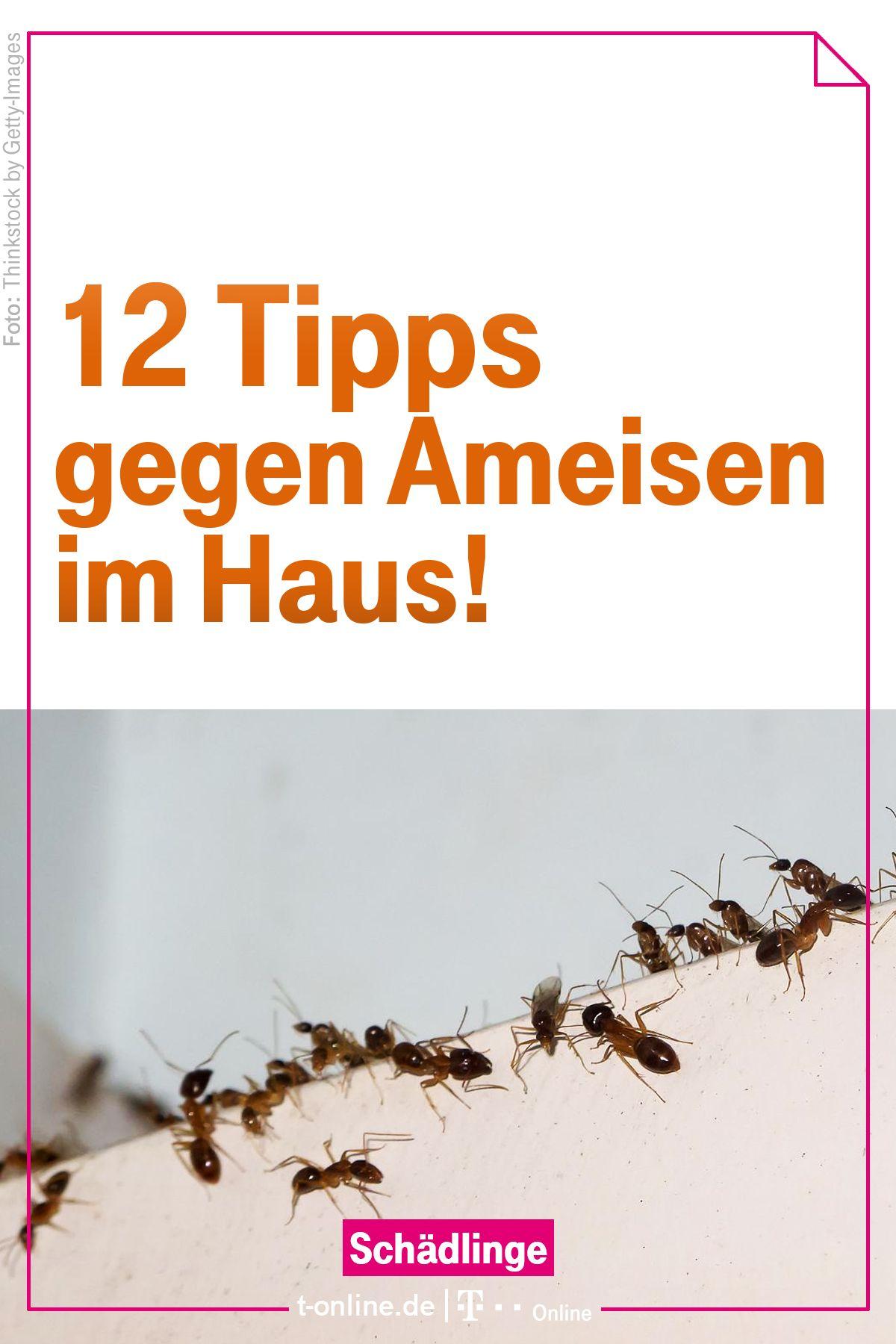 Zwölf einfache Tipps gegen Ameisen im Haus   putzen waschen ...
