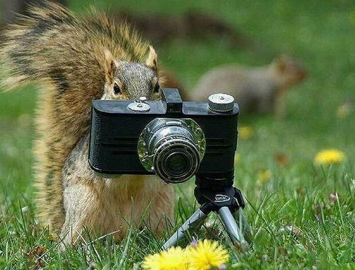 What are you doing - take the picture will ya!