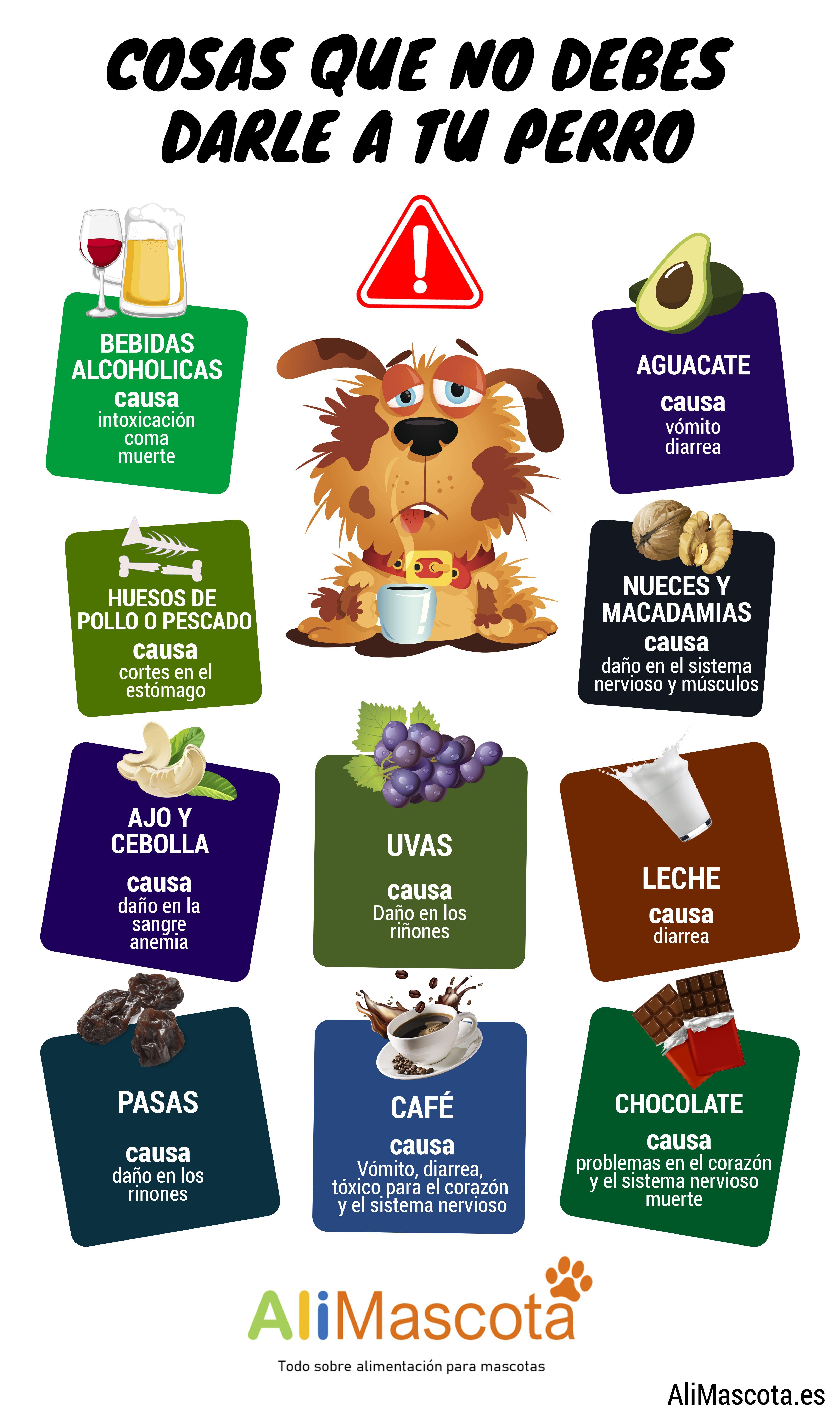 Qué No Pueden Comer Los Perros En 2020 Alimentos Prohibidos Para Perros Alimentacion Perros Alimento Perros