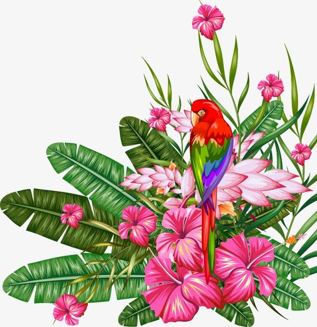 Tropical Plant Material Tropical Clipart Tropical Plants Plant Vector Png Transparent Clipart Image And Psd File For Free Download Tropical Illustration Tropical Art Plant Vector