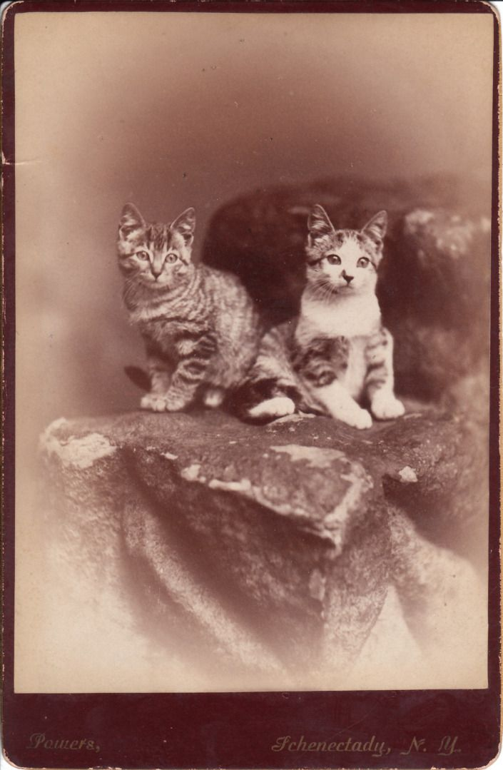 +~+~ Antique Photograph ~+~+  Formal Portrait of someone's favourite kitties.
