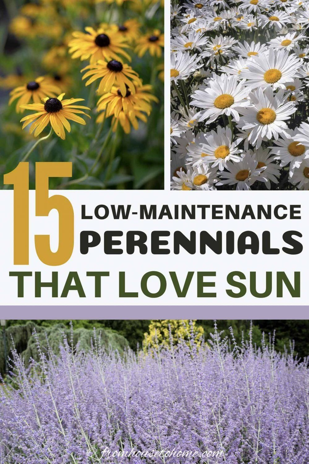 Photo of Full Sun Perennials: 15 Beautiful Low Maintenance Plants That Thrive In The Sun – Gardening @ From House To Home