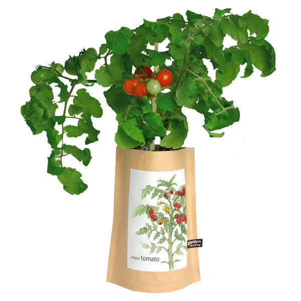 Mini Tomato Garden-in-a-Bag - The Mini-Tomato Garden-in-a-Bag from ...