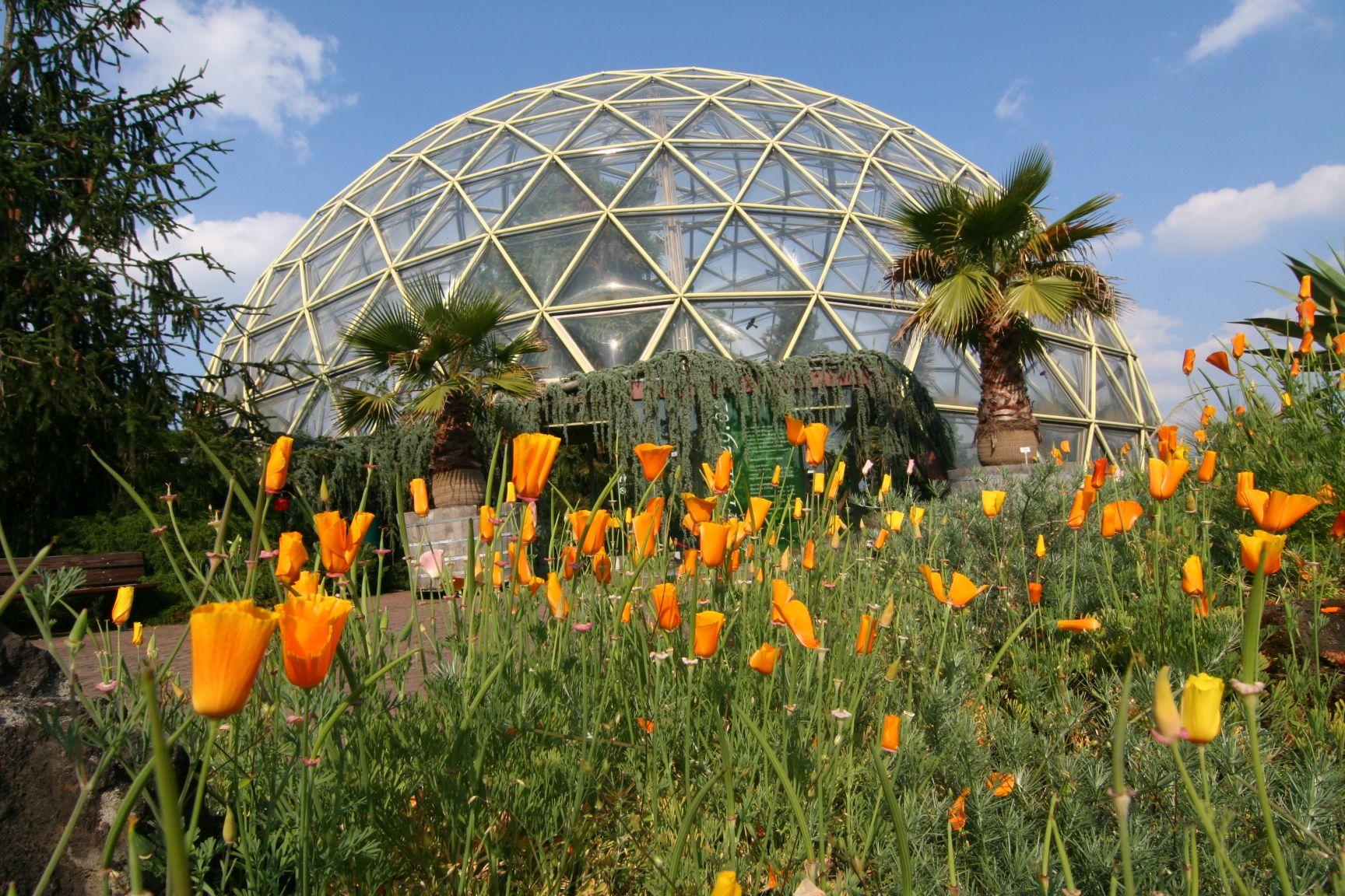 Botanischer Garten Heinrich Heine Universitat Dusseldorf Botanischer Garten Garten Kakteen Garten