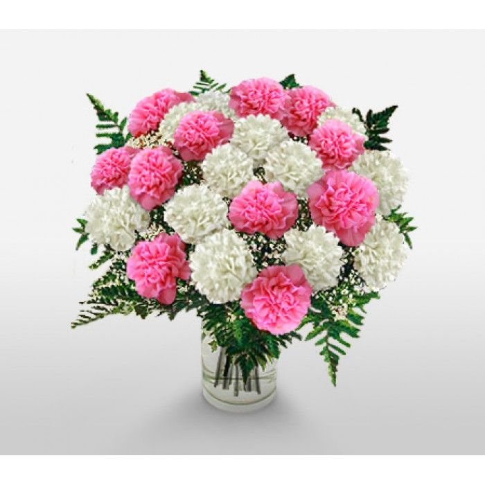 2 Dozen Carnations Vase Arrangement C2201 Funeral Flower Arrangements Best Smelling Flowers Smelling Flowers Online Flower Delivery