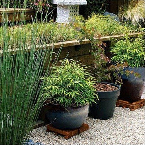 bambus garten im hause wachsen minigarten gestalten | tolle idee, Hause deko