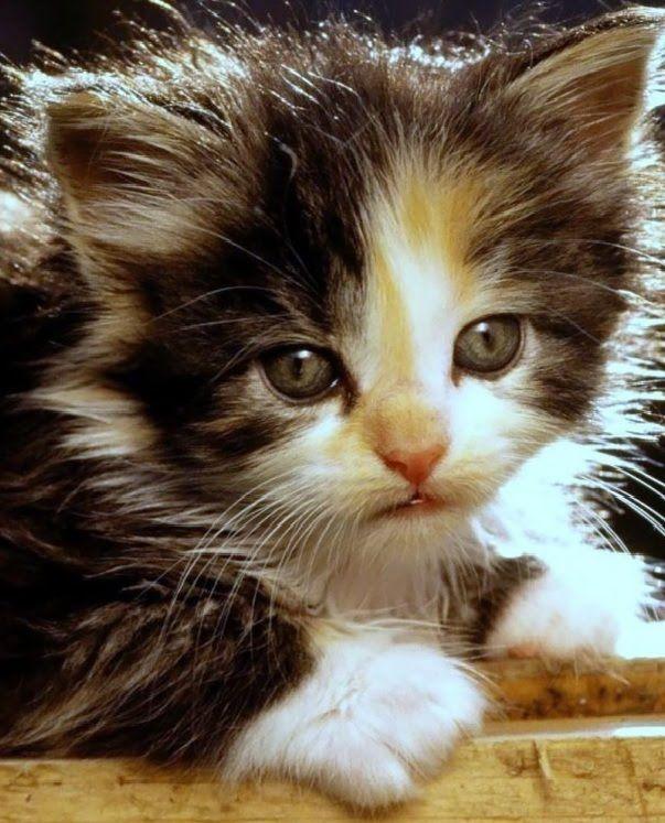 Tente Não Rir Com Gatos Muito Engraçados