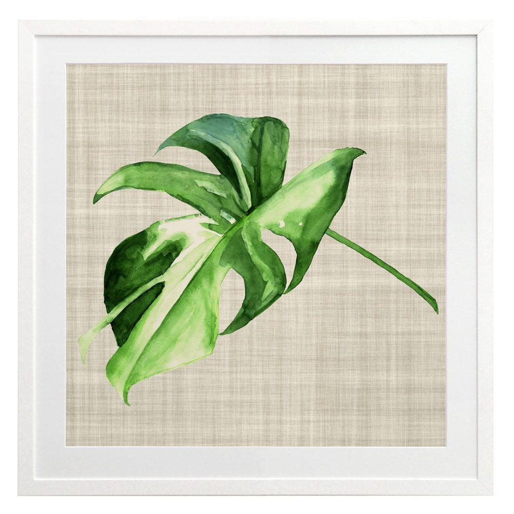 Araceae art print