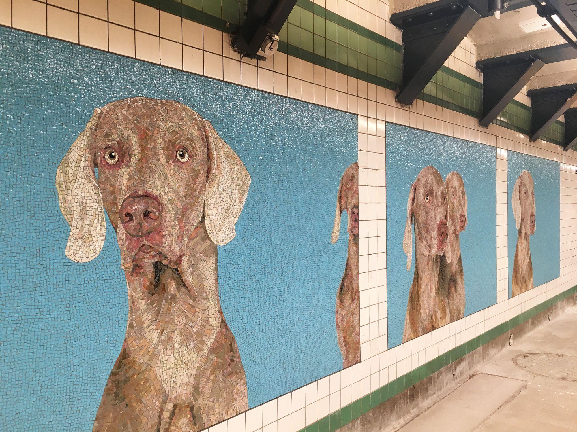 Wegman Murals Cheer Up Reopened 23rd St F M Station Subway Art