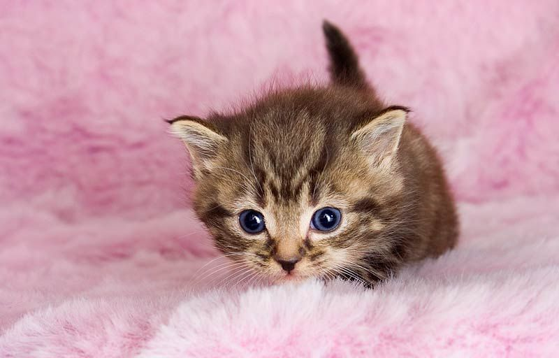 Imagenes De Gatitos Bebes Tiernos Gatitos Fluffy Animals Cute