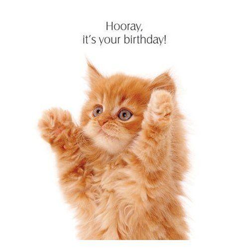 Ginger Cat Happy Birthday Ginger Kitten Birthday Card Hooray
