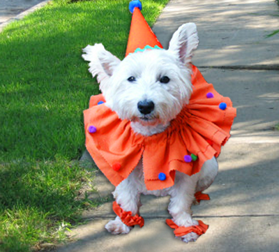 How-To Dog Clown Costume from Ritsters Rit Fabric Dye Clothing Dyeing. How to dye then cut + sew this clown collar that slips through your own dogu0027s collar ... & How-To Dog Clown Costume from Ritsters Rit Fabric Dye Clothing ...
