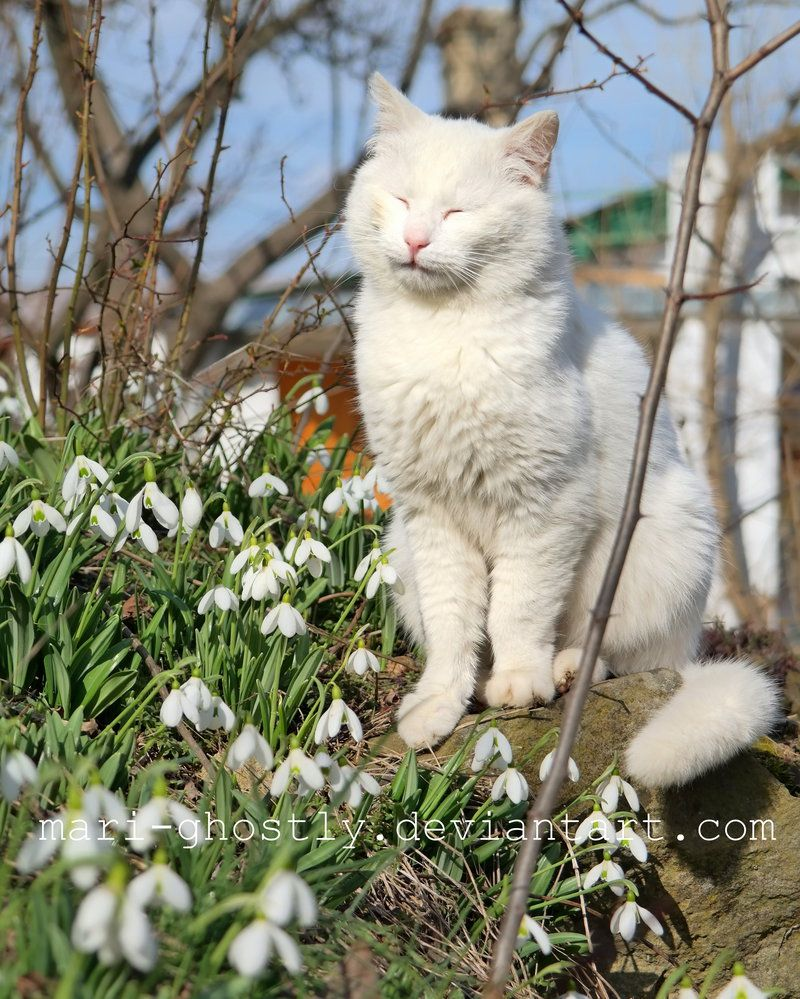 catGreen (he) all rights reserved Any copying to other sites illegally