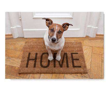 Pillar To Post Newsletter November 2016   Pillar To Post Home Inspectors