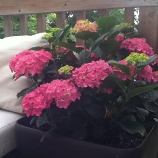 Lovely patio plants