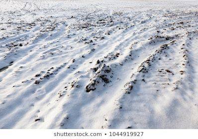 plowed soil under white snow, on the surface can be seen traces of the transported traffic, closeup in the winter cold and snow blizzards #agriculture, #background, #beautiful, #blizzards, #bright, #can, #clear, #closeup, #cold, #color, #countryside, #design, #dune, #earth, #empty, #environment, #field, #flat, #freeze, #frost, #ground, #ice, #land, #lawn, #level, #meadow, #natural, #nature, #outdoor, #outdoors, #plowed, #rural, #sand, #season, #seen, #snow, #snowy, #soil, #surface, #traces, #tra