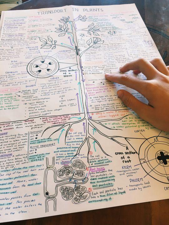 Studyzors Biology Notes Transport In Plants Fisiologia Vegetal