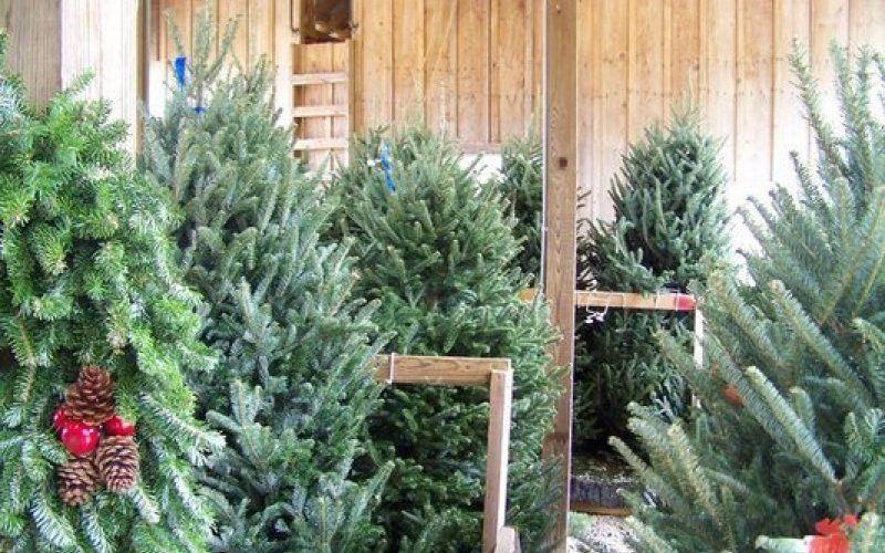 Country Cove Christmas Tree Farm | Tennessee Vacation - Country Cove Christmas Tree Farm Tennessee Vacation Christmas