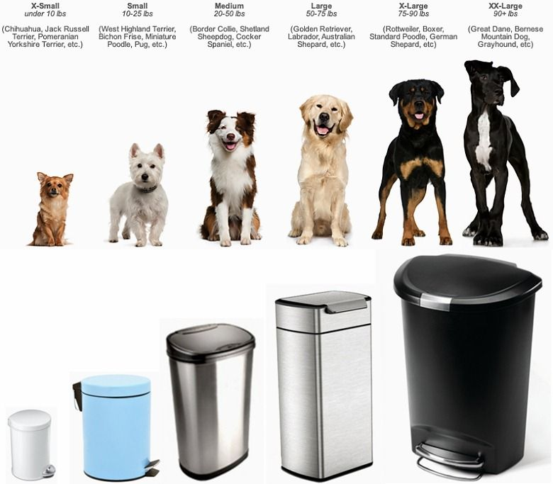 Different sized dog need trash can accordingly   Dogs and