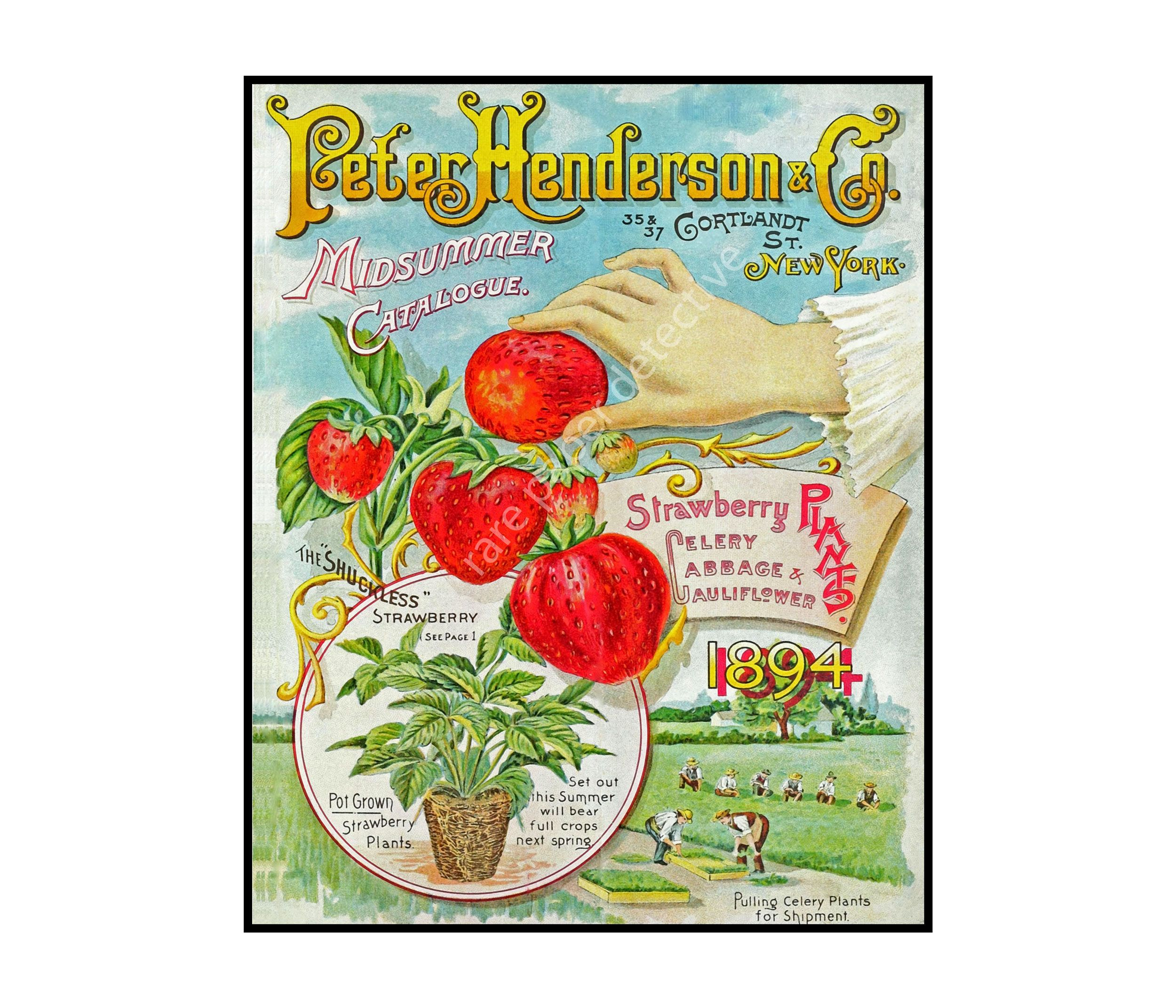 Pin on Garden & Farm Decor Prints, Seed Pack & Catalog Art
