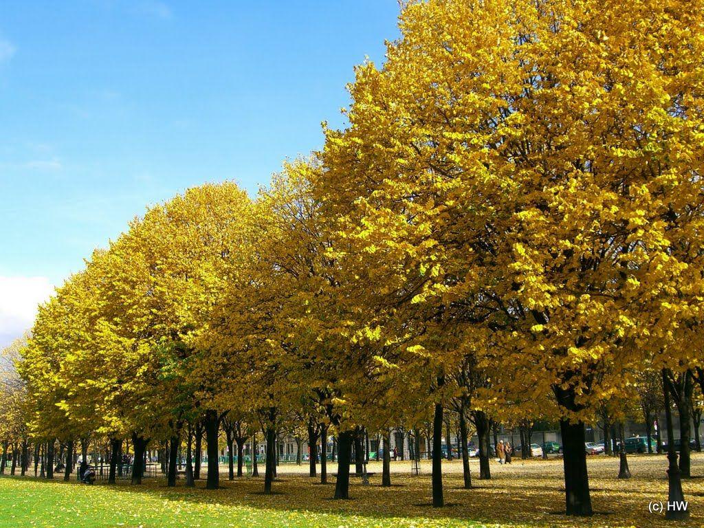 autumn in paris - Pesquisa Google