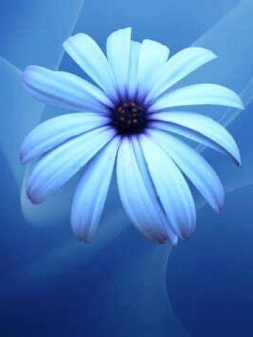Light Blue Flower Wallpaper Iphone Blackberry