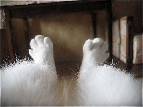There's nothing sweeter than some furry toes! They look like bunny feet