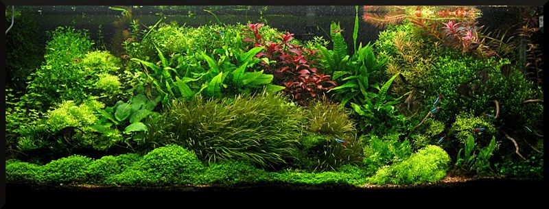 Beautiful Aquascaping | Thread: AQ ADA Singapore Aquascaping Contest 2010 Tank Photos