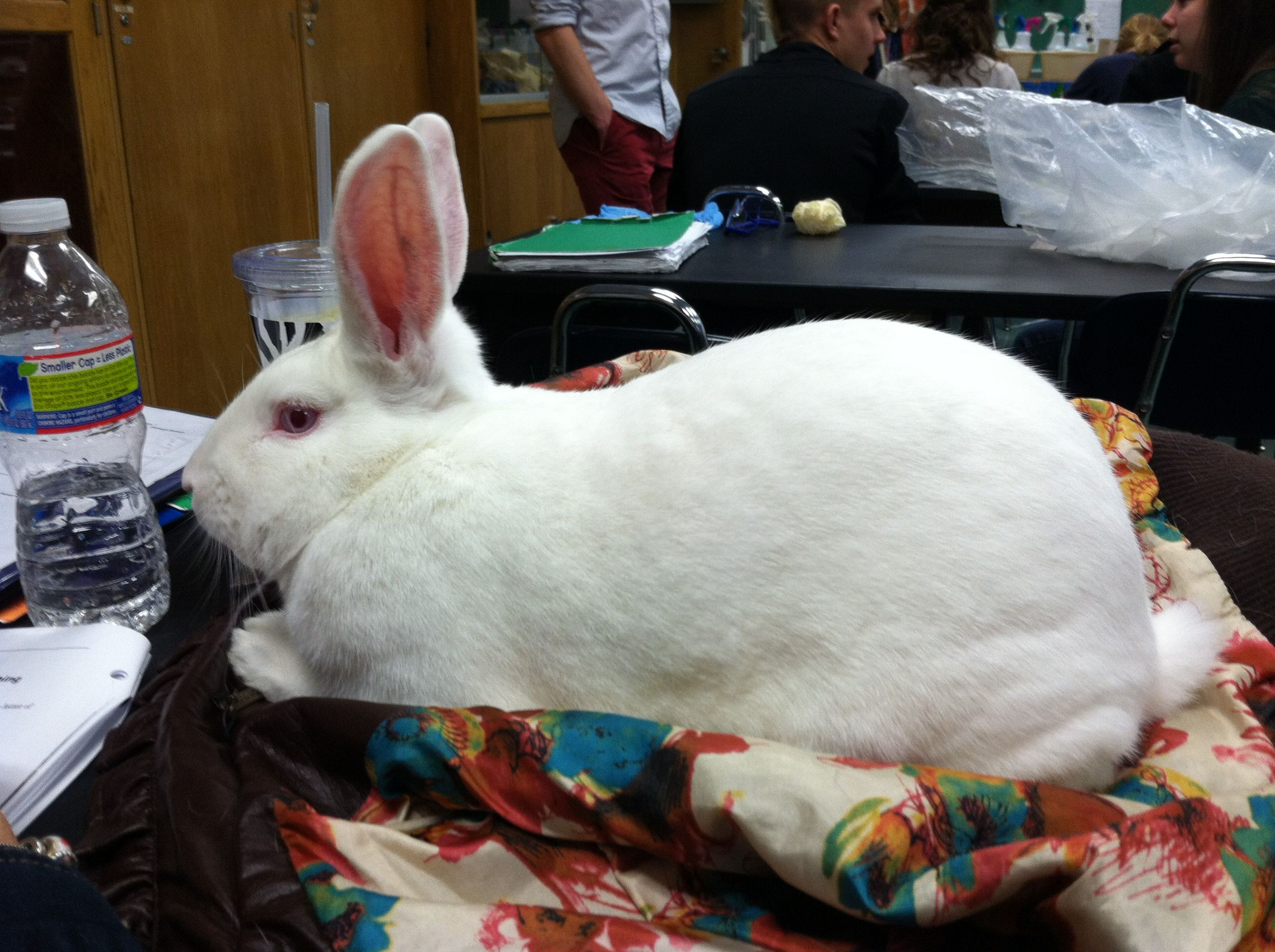 Bunnyy<3