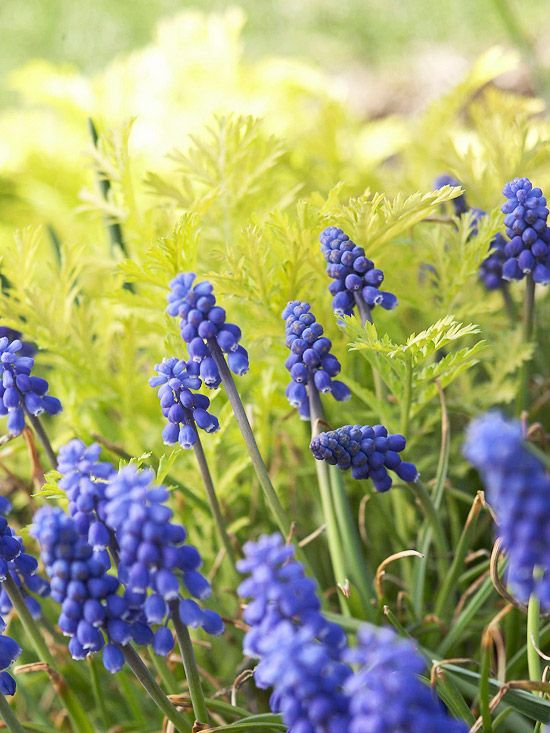 8 Small Gardens That Will Inspire You In Any Season: 21 Of The Best Spring Flowers For Your Garden