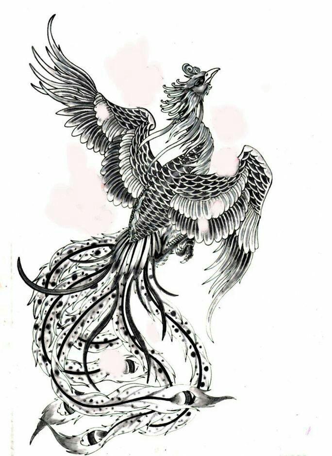 Japanese Phoenix Tattoo Design Phoenix Tattoo Tattoos Phoenix Tattoo Design