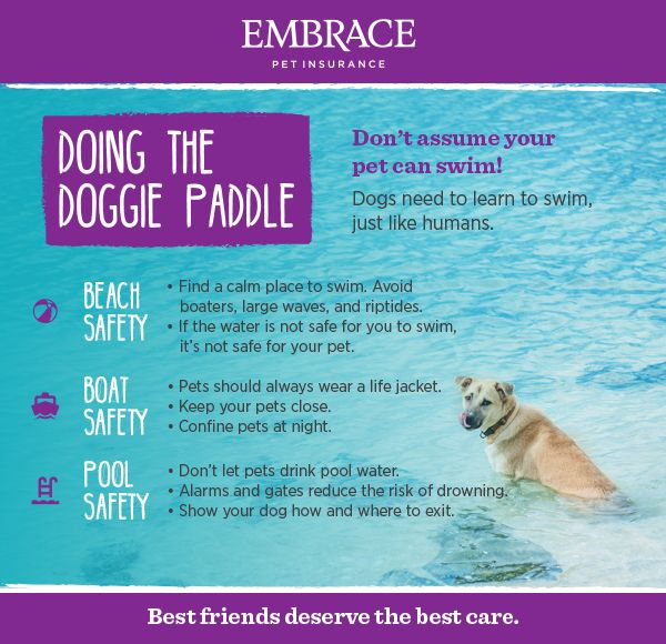 Swimming Safety Tips Embrace Swimming Safety Pet Water Safety Dog Swimming