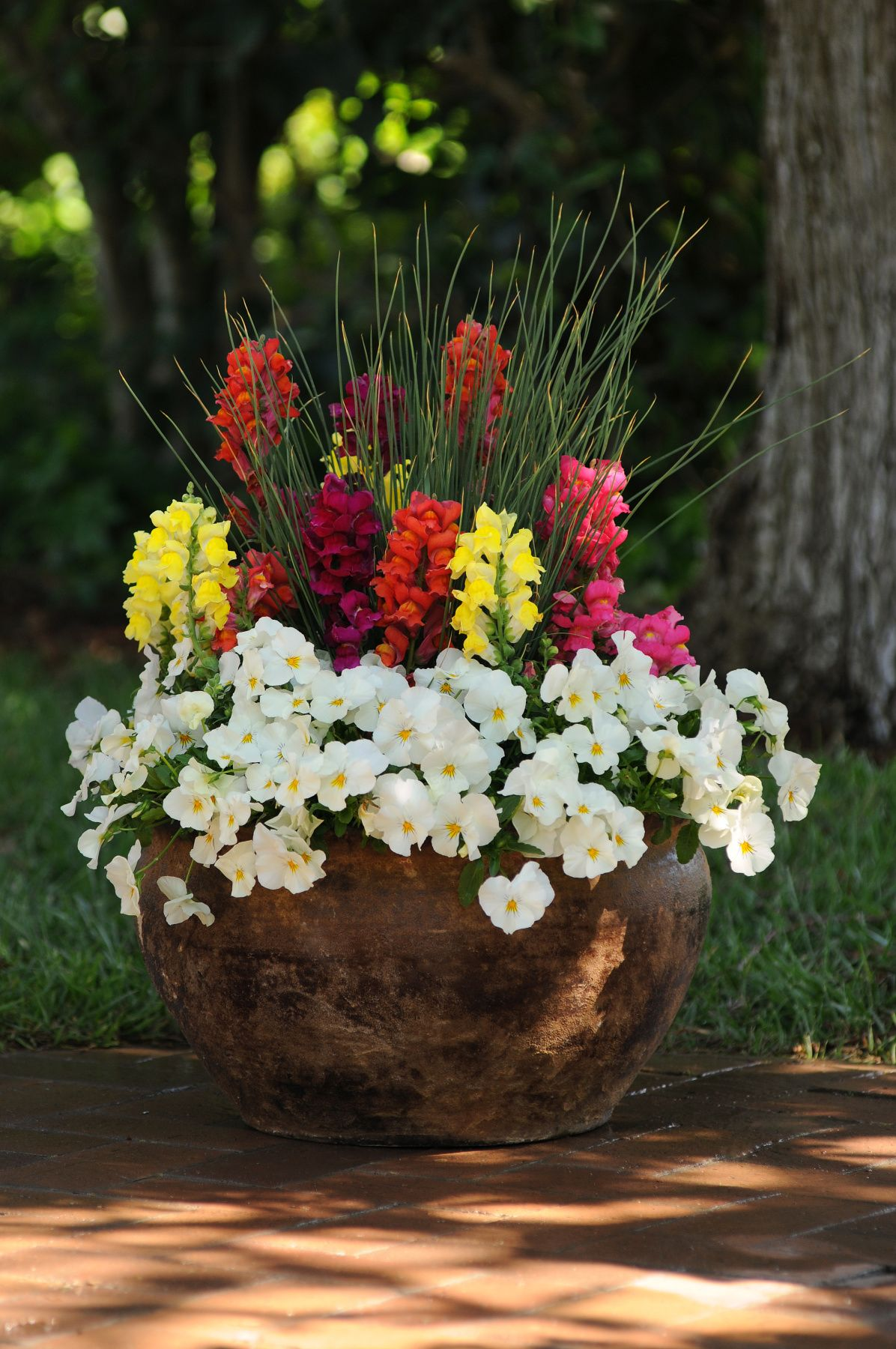 Snapdragon Pictures Container flowers, Container