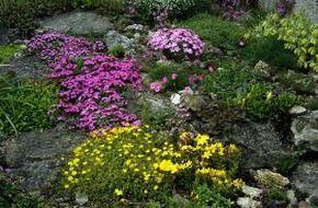 Einen Steingarten auf unserem Hügel anlegen. Erledigt √